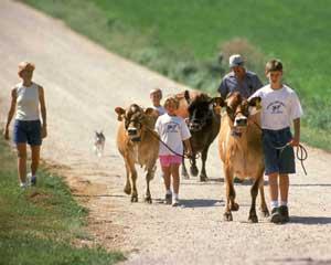 wisconsin dairy artisian network