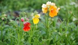 Bloom's Organics